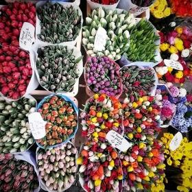 Ey Berlin, was los mit dir?!?! Gut, dass man sich den Frühling kaufen kann! …zumindest ein bisschen… #halloherz #berlin #kastanienallee #flowers #spring #2016 #love #liebe #schlechteswetter #gutelaune #omg