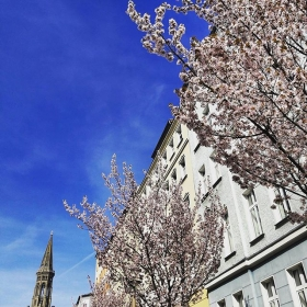 Hallo Frühling, du machst mir Herzklopfen!  #halloherz #berlin #kastanienallee #zionskirche #zionskirchstraße #zionskirche #kirschblüten #cherryblossom #flowers #nature #spring #colours #picoftheday #sun #instamood #insta #happy #happyweekend #weekend #saturday #bluesky #shopping #goplayoutside #love #style #fashion #fashionlover
