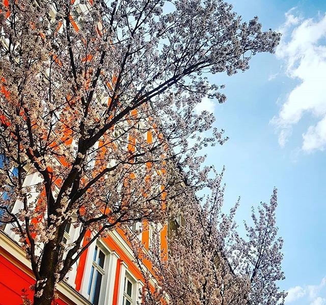 …diese eine kleine Woche im Frühling… #cherryblossom  Berlin, ich liebe dich!  #frühlingsgefühle #halloherz #berlin #kastanienallee #spring #trees #nature #naturelover #goplayoutside #bluesky  #girlpower #girlboss #style #fashion #shopping #girls #fashiongoals #love #liebe #picoftheday